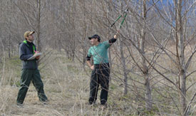 Faculty of Forestry scientists uncover cause of tree-killing fungus