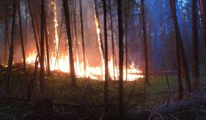 Active Wildfires Cause Intense Feelings for Research Forest Manager
