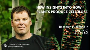 New insights into how plants produce cellulose
